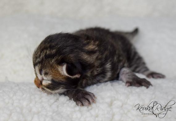 Keuka Ridge Eliana - 4 Days Old