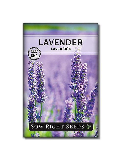 Lavender Seeds for Planting; Non-GMO