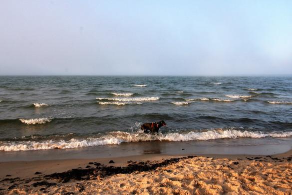 baltic-sea-6075796_1920.jpg