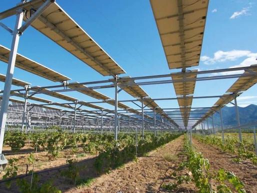 En quête d'espace, la filière photovoltaïque lorgne les terres agricoles