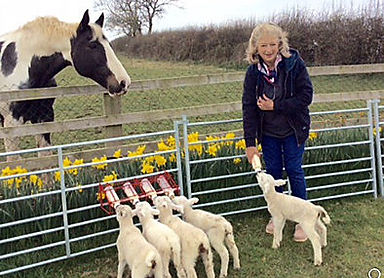 Robbie Lambs feeding.jpg