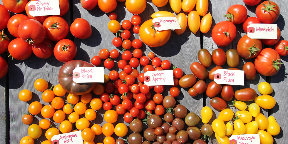 TOMATO-GROWING for the Northern Gardener