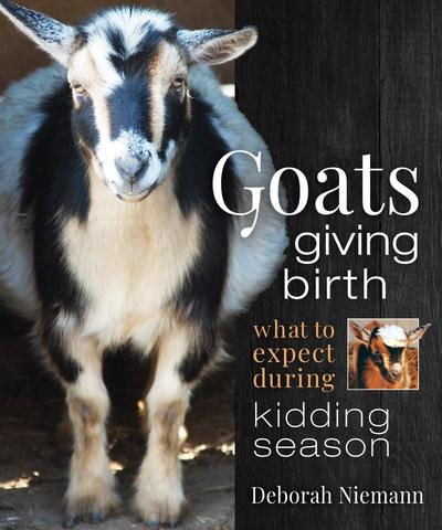 Goats giving birth.jpg