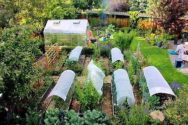 garden pic 10.jpg
