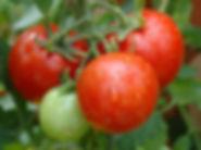 tomato-536a30e52633bf73a0f766293fb0cbe15