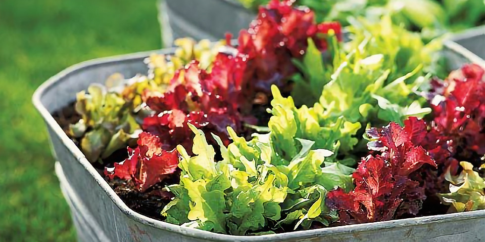 CONTAINER GARDENING FOR SMALL SPACE GROWING