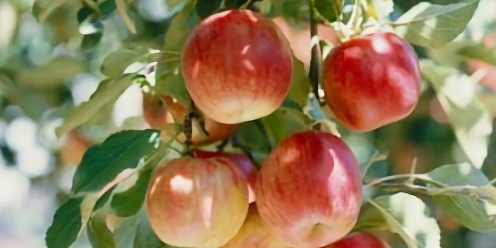 THE COLD CLIMATE FOOD FOREST