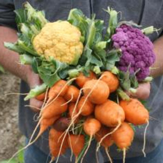 GARDEN TO TABLE- Growing Food to Feed Your Family