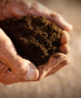 hands-and-soil-480px.jpg