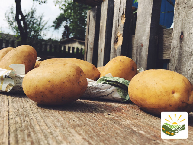 Картофель урожая 2017 года