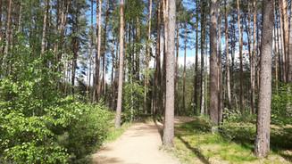 Wald Bad Bevensen
