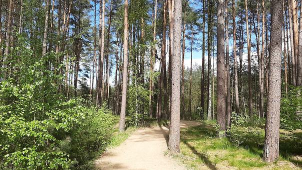 Wald Bad bevensen (2).jpg