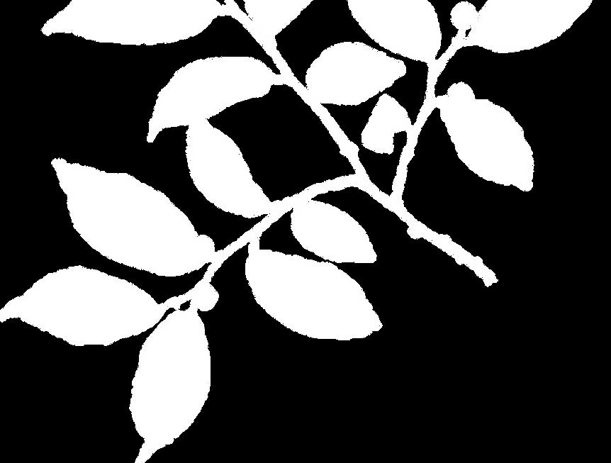 הגרנולה של מרב