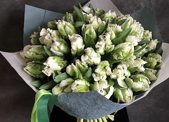 Букет тюльпанов Пэррот от 25 шт (цвет на выбор)
