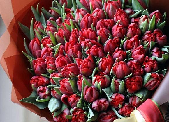 Букет махровых тюльпанов от 25 шт (цвет на выбор)