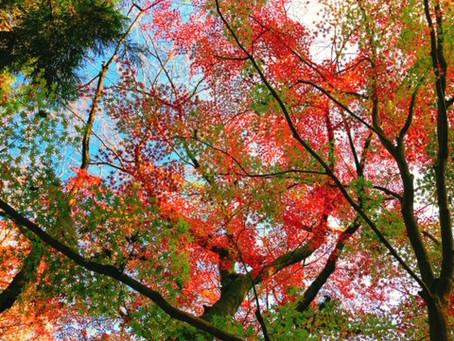 秋の古賀志山登山