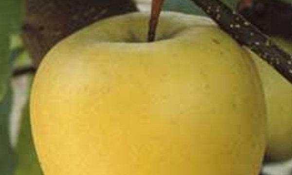 Melo Limoncella