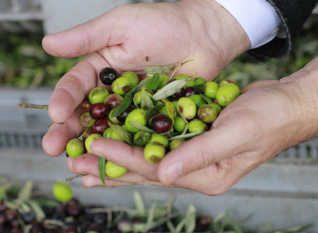 来春販売の新オリーヴオイル予約受付が始まります。