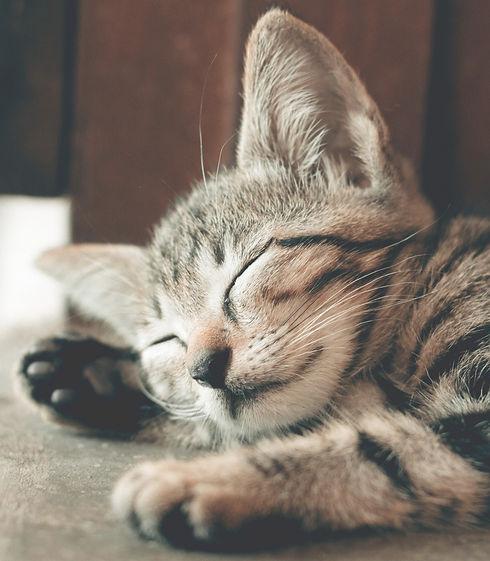 close-up-photography-of-sleeping-tabby-c