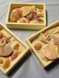 Sweets 07 Seashell Chocolate Boxes