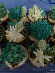 Other 23 Succulents Celebration Cupcakes