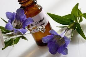 Fleurs de Bach Healing Herbs.jpg