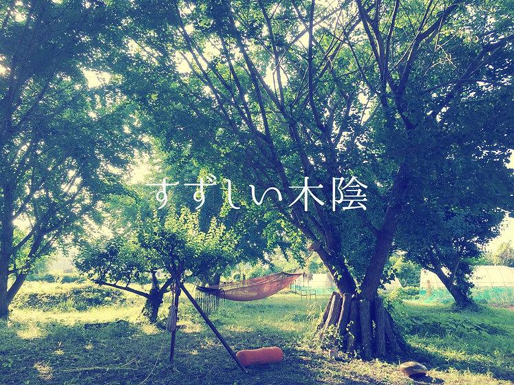 wix_kokage_チラシ表_photo0123.jpg