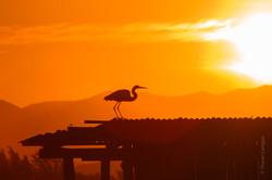 Lagoa de Ibiraquera - por do sol4