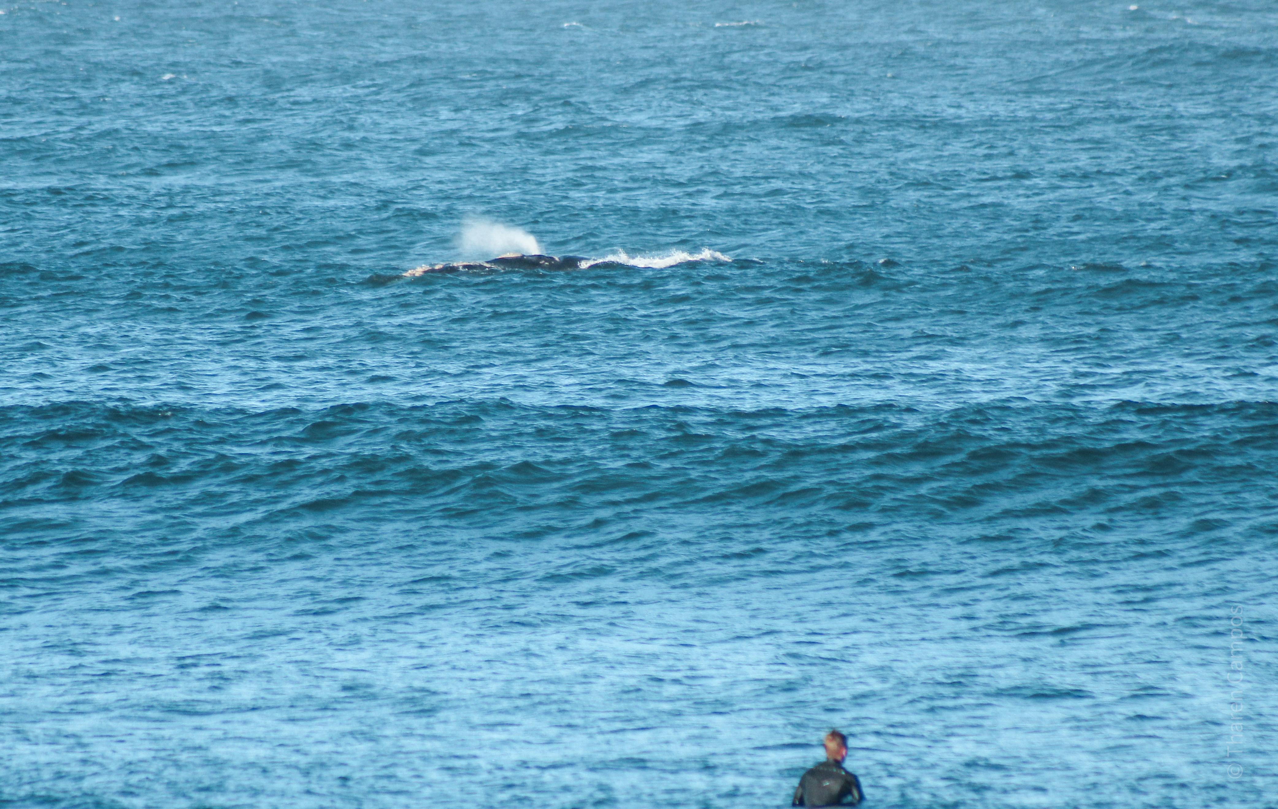 Baleia 18