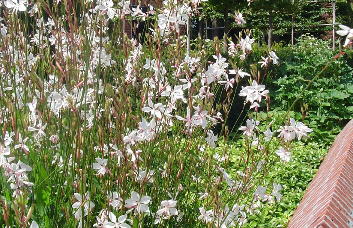 bloeiende beplanting