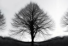 tree-90059_1920.jpg