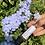 Thumbnail: Flower Power ~ Blossom Oil