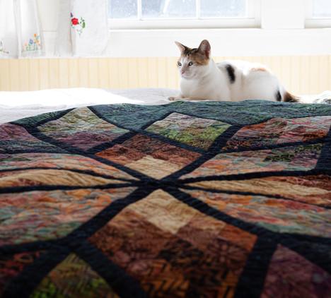 Kitten on a Quilt