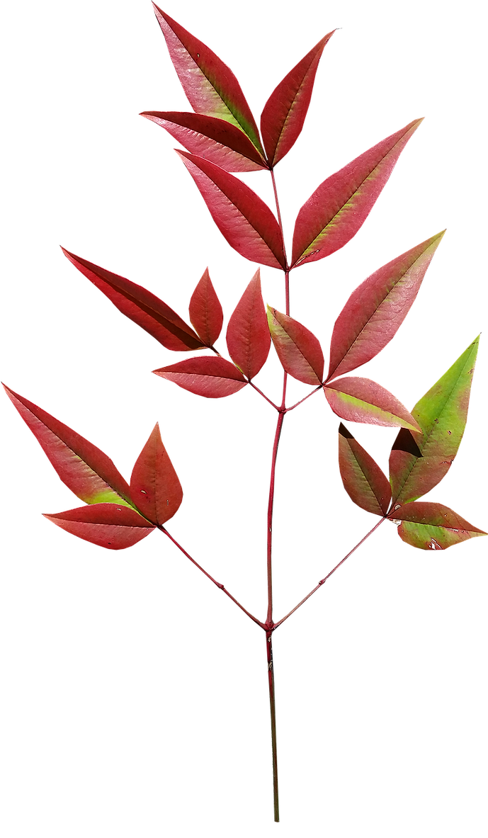leaves-3306243_1280.png