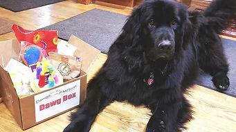 luna lovegood dawg box.jpg