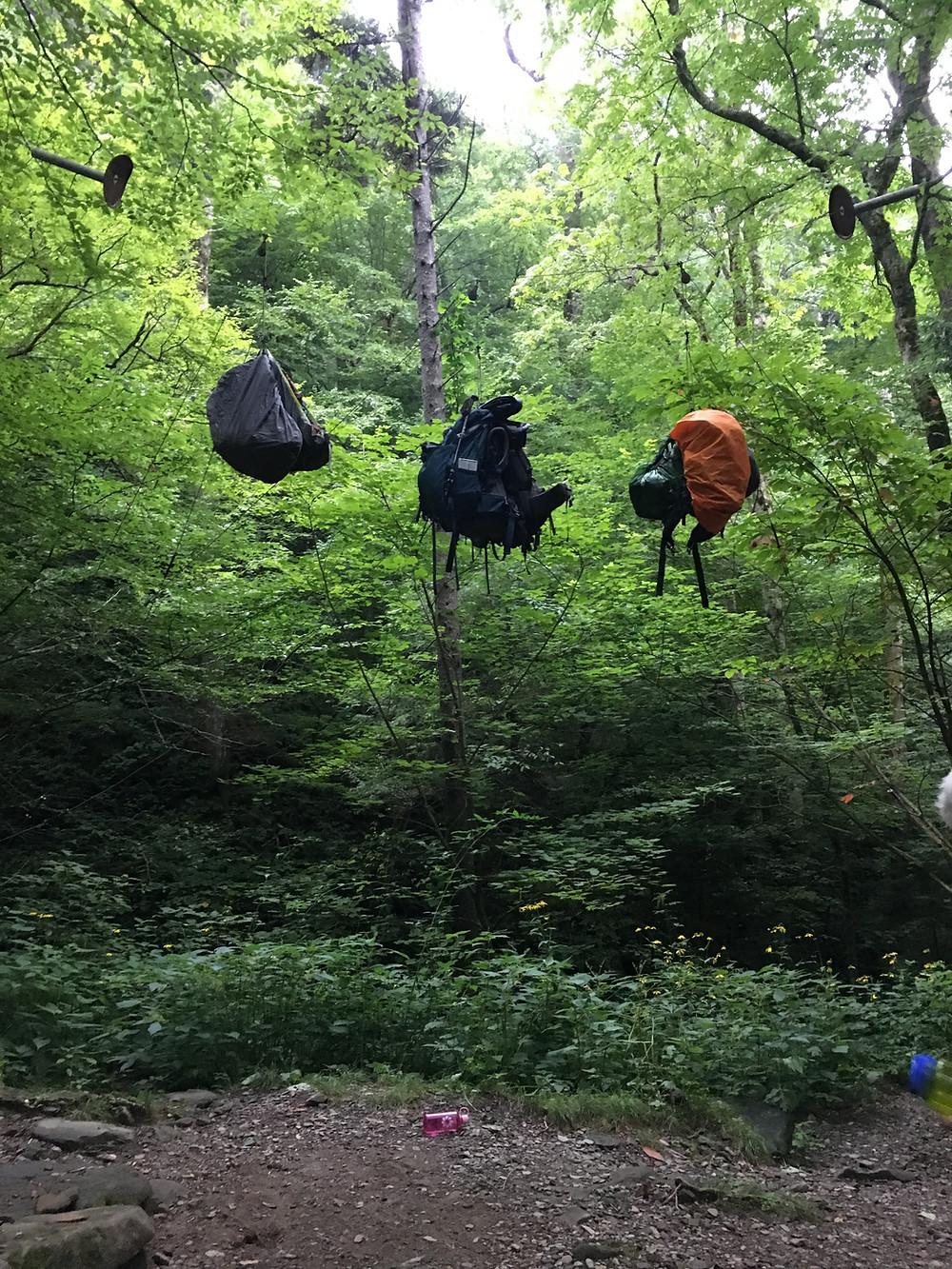Bear Hangs