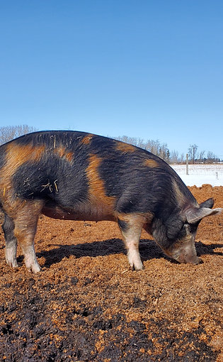 Pasture Raised Pork (down payment)