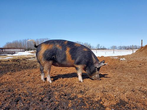 Pasture Raised Pork (down payment)