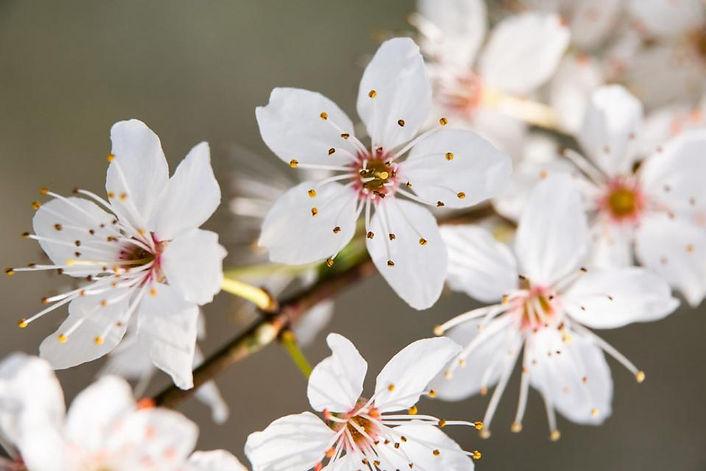 Frühlingsmomente_4.jpg