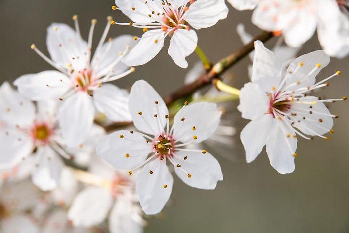 Frühlingsmomente_1.jpg