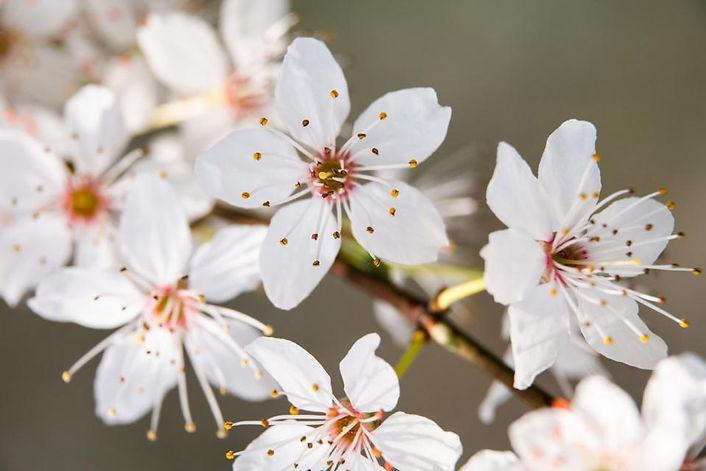 Frühlingsmomente_2.jpg