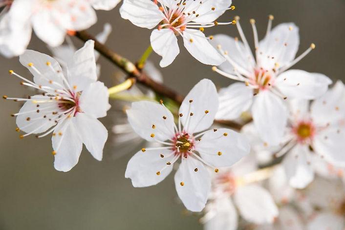 Frühlingsmomente_3.jpg