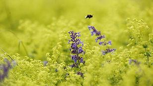 answick-gardens-101__v-videowebl.jpg