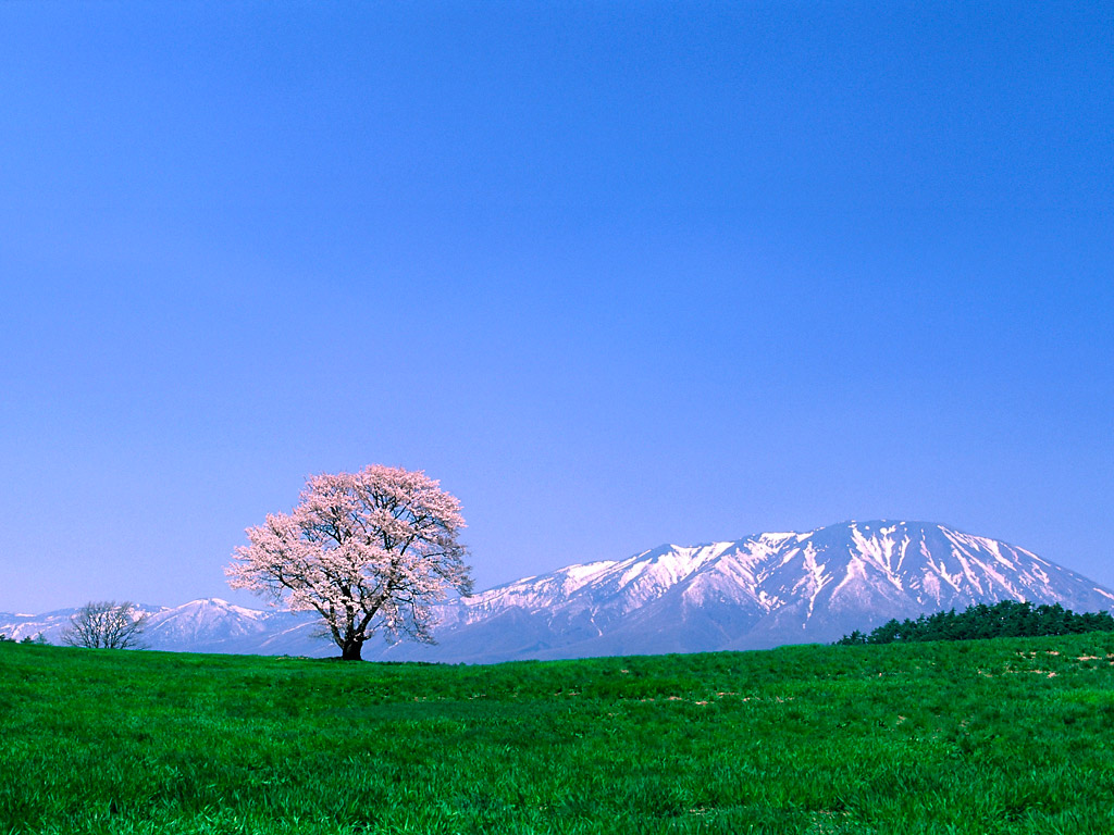 Fuji-Mountain-Japan-Pictures