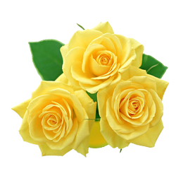 roses yellow