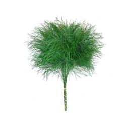 tree fern flowers