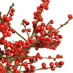 illex berry red