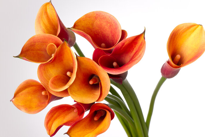 callas orange