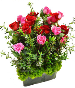 red and pink roses valentines