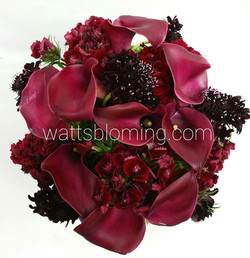 wow great review from a new client that we sent this out for today___I found Watt's Blooming over th
